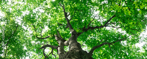 Fotobehang Groene forest trees. nature green wood sunlight backgrounds