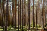 Sunlight in forest - 212615288