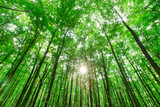 Forest trees. nature green wood sunlight backgrounds - 212616489