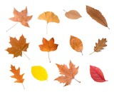 dried leaves group - 212623265