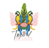Hand drawn vector abstract cartoon summer time graphic illustrations art with exotic tropical sign with rainforest Parrot Macaw birds,watermelon and Tropical Season text isolated on white background - 212630800
