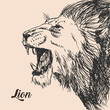 Vector hand drawing sketch of the lion