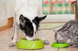 Hund und Katze fressen nebeneinander - 212643420