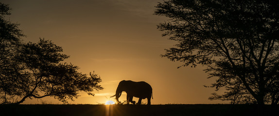 Elephant alone in the savanna © Anders