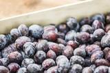 plum fruit isolated