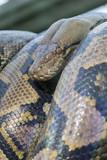 snake - 212655402
