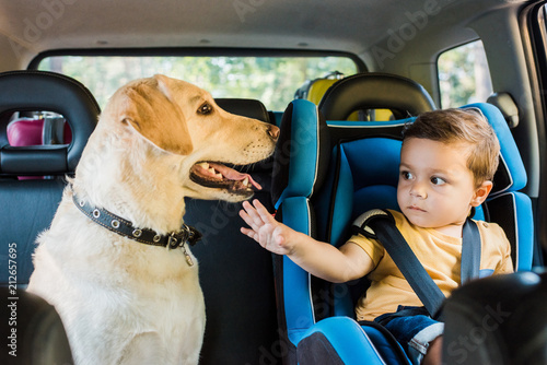 Wall mural adorable toddler boy in safety seat touching labrador dog on backseat