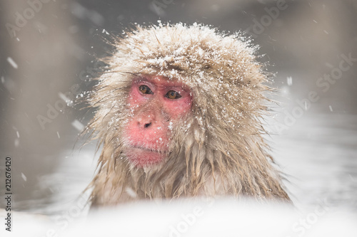 Fotobehang Aap Jigokudani Monkey Park , monkeys bathing in a natural hot spring at Nagano , Japan