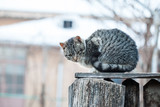 Cat on a wooden fence  - 212678635