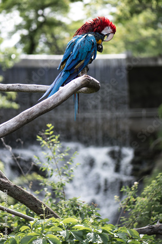 Fototapeta Parrots and a waterfall