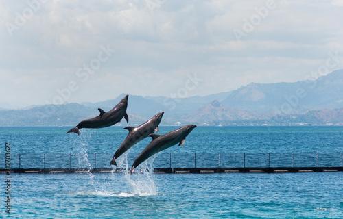 Fototapeta three flying bottle-nose dolphins