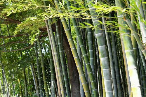 光と影の竹林