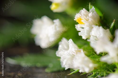 Beautiful white spring flowers on dark background. Macro shot - 212713476