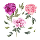 Beautiful Watercolor set with peony flowers.  - 212714486