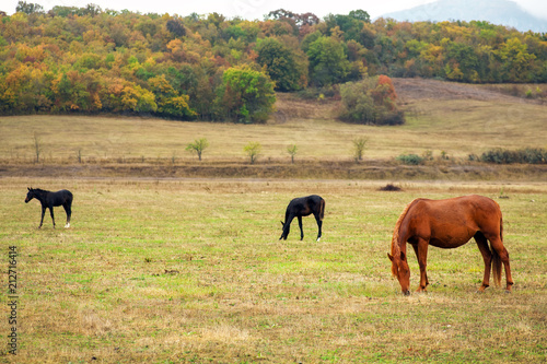 Fotobehang Paarden Horses graze near the mountain in the pasture in the autumn.