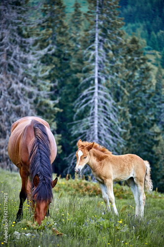 Horse with posterity in the pasture in the summer. - 212719678