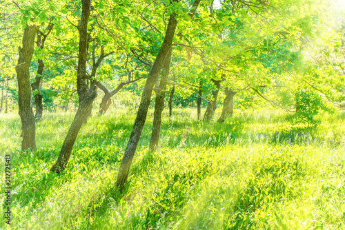 Foto Spatwand Zwavel geel Tree trunk in park with field of green grass and sun light