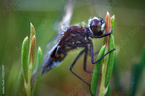 Closeup of a dragonfly - 212731891