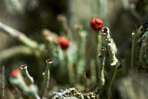 Small plants in closeup - 212732083