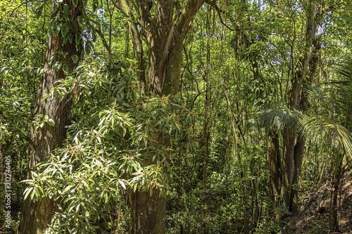 Piękny las deszczowy