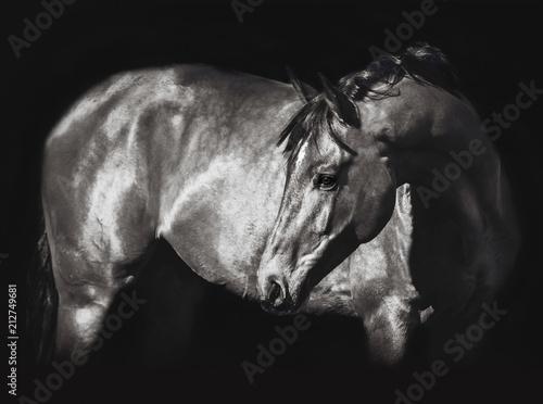 Fotobehang Paarden Beautiful stallion posing on a black background