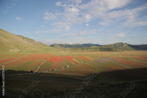 Fotobehang Bleke violet Symphony of natural colors. The summer flowering of Castelluccio di norcia