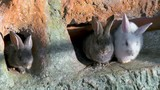 Rabbits. Nature background - 212757682