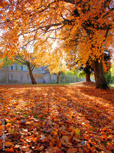 Trees in autumn colours - 212759274