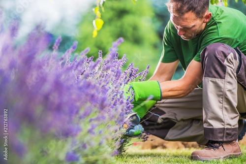 Fototapeta Removing Garden Weeds