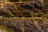 Los erizos están entre la roca.  - 212769655