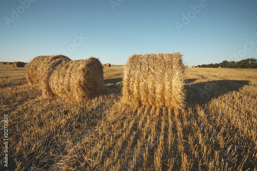 Foto Murales Hay bale on field with wheat straw and sky in the farm land at summer.