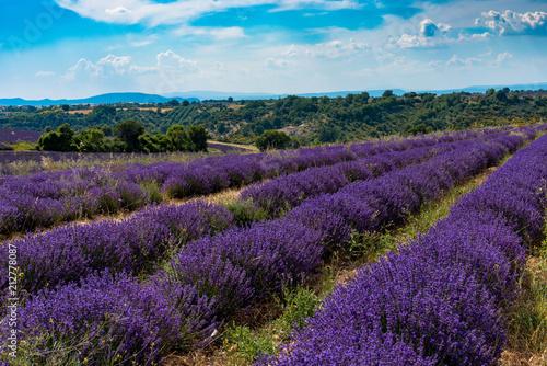 Canvas Lavendel Champs de lavande sur le Plateau de Valensole en Haute-Provence