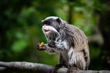Monkey - 212779005