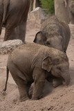 Elephant sibling love
