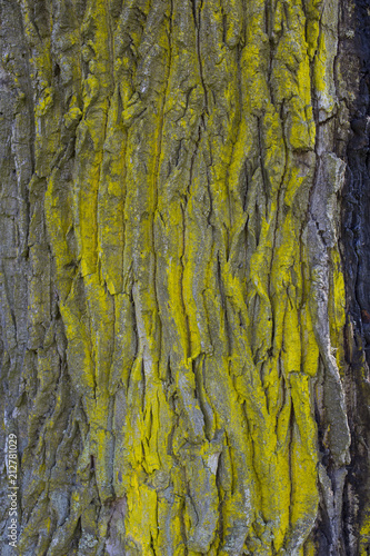 The dark bark of a tree is painted with bright paint (texture and background) - 212781029