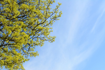Bright green leaves against blue sky
