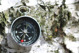 Classic compass on natural wooden background with birch bark texture