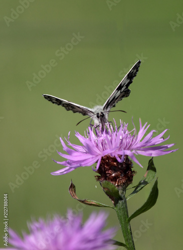face to face with the butterfly - 212788044