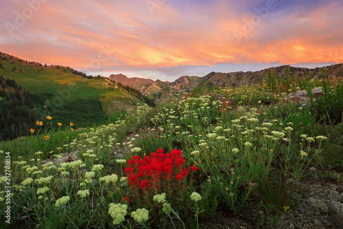 Fotobehang Zalm Colorful wildflowers in the Wasatch Mountains, Alta, Utah, USA.