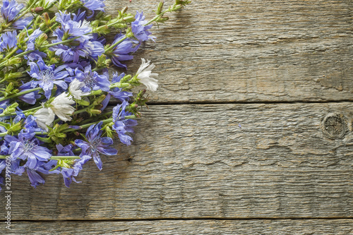Chicory flowers on rustic wooden background. Medicinal plant Cichorii. Copy space