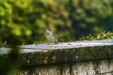The birds on the feeding time - raining -natural scenery - 212804614