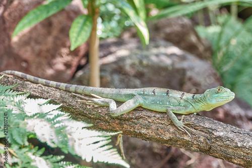 Aluminium Kameleon echse