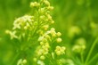Wildflowers and grass background.bright green field grass in the sun . fresh   Wildflowers background .soft focus. Summer herbal background
