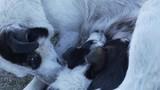 dogs enjoying with mom - 212852875