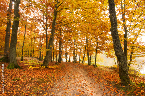 Fotobehang Honing Road in a colorful, autumn forest.Pomerania ,Poland