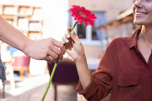 Nice flower. Beautiful woman feeling thankful while receiving nice red flower from her caring loving man