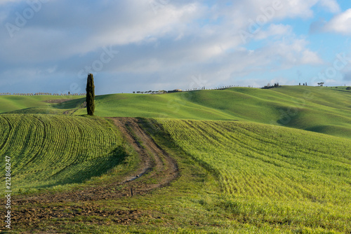 Green rolling hills near San Quirico d'Orcia, Tuscany, Italy - 212868247