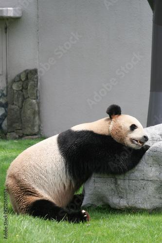 Plexiglas Panda パンダ