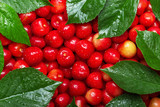 Pink cherries with leaves in drops of water - 212870678
