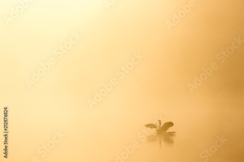 Fotobehang Zen Calm and tranquil zen like nature image of birds in a lake with warm light and empty space